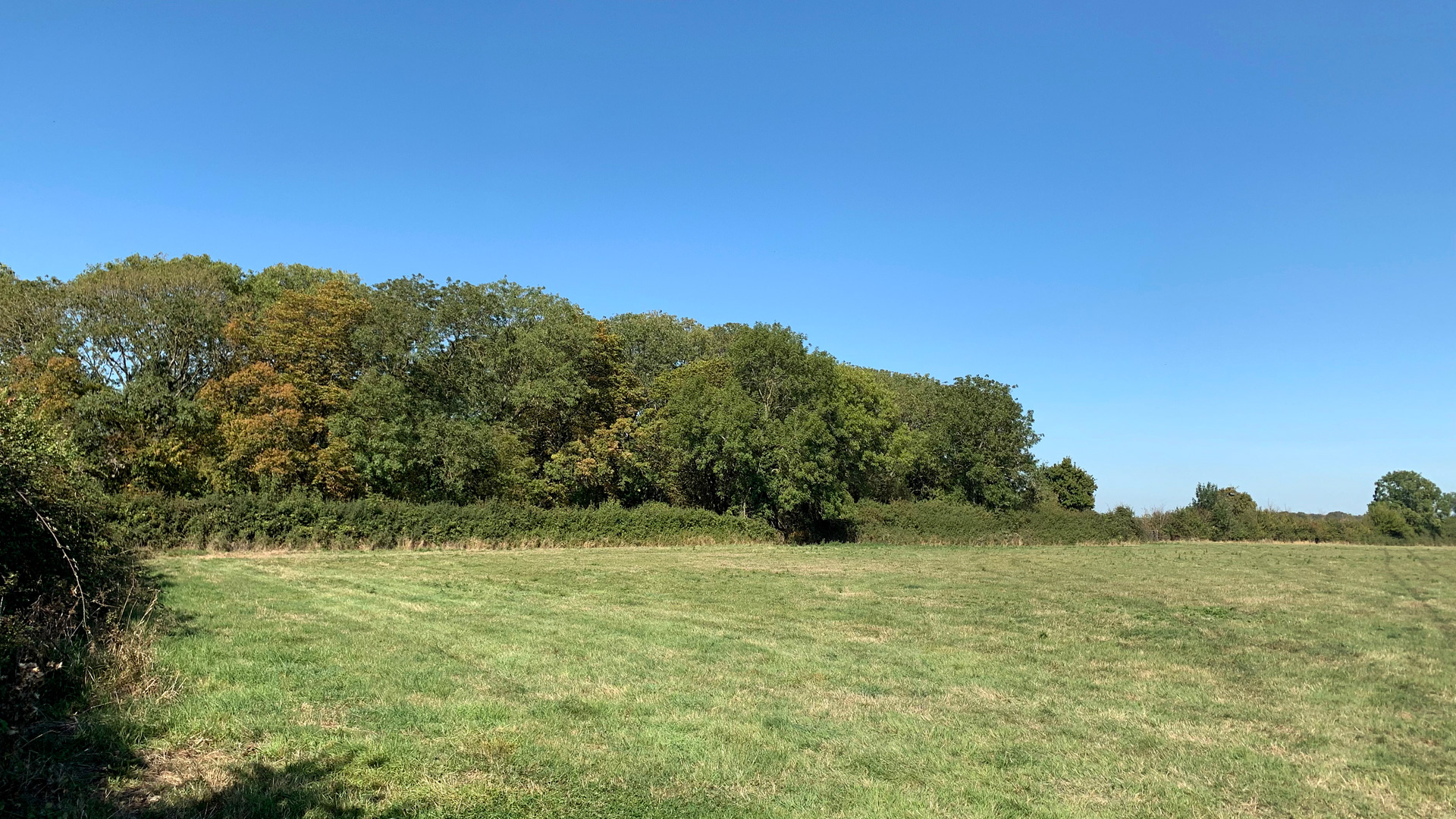 Grazing land for sale in Buckland