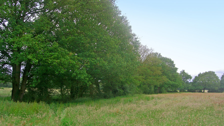 Grazing land for sale in Lingfield