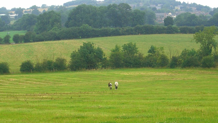 Grazing land for sale in Markfield