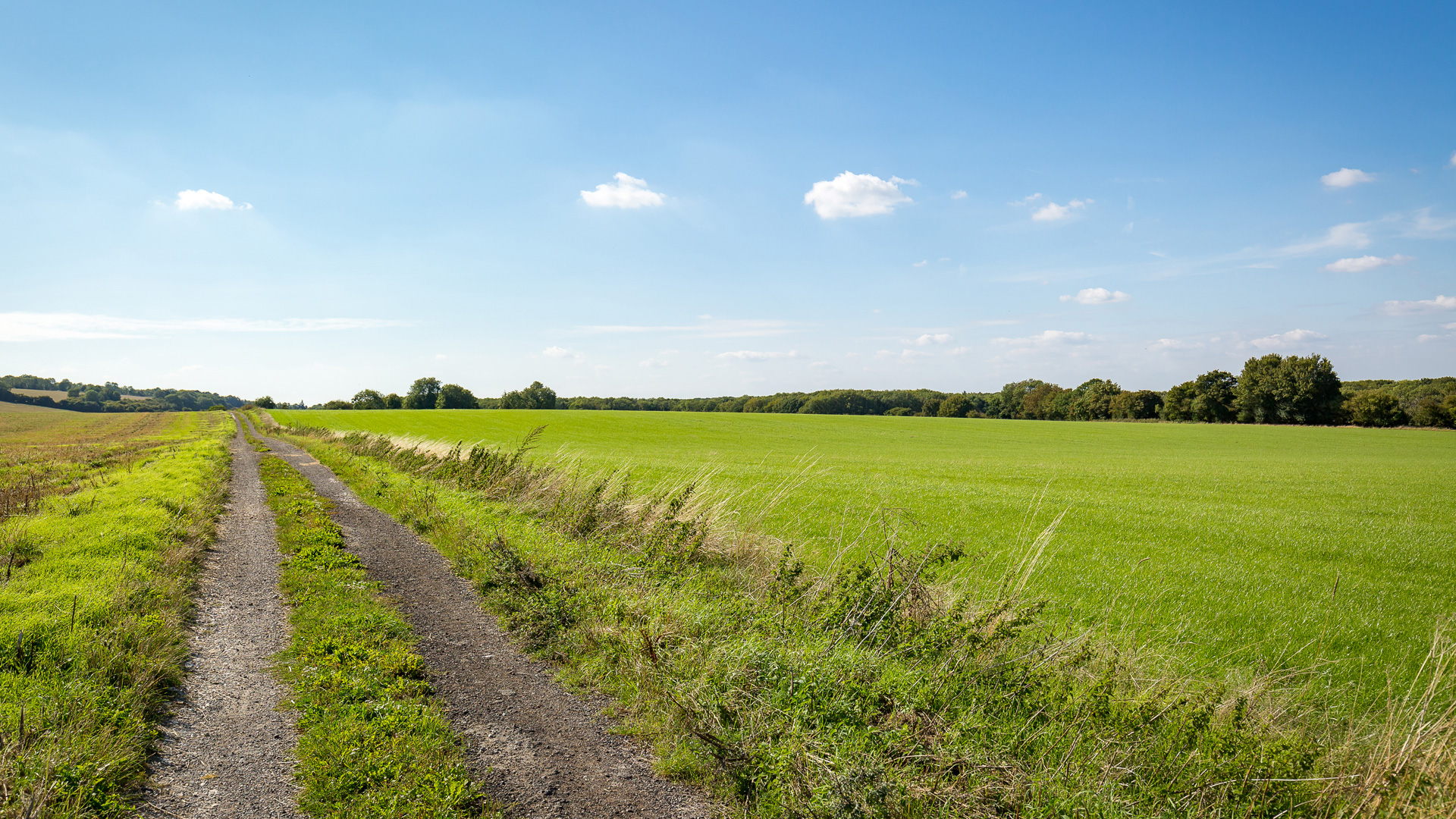 Land for sale in Guildford access