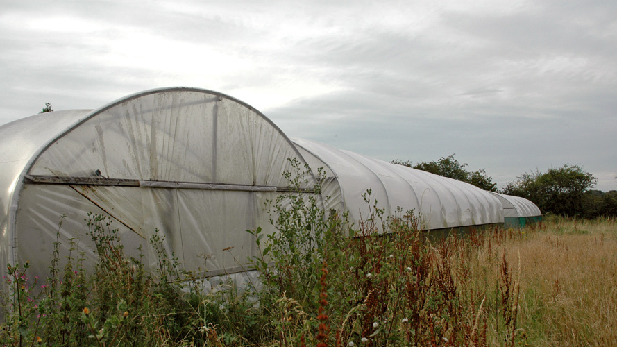 Polytunnels for sale in Studham