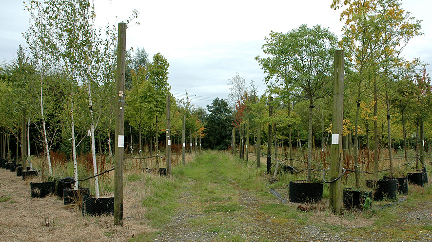 Trees for sale in Studham