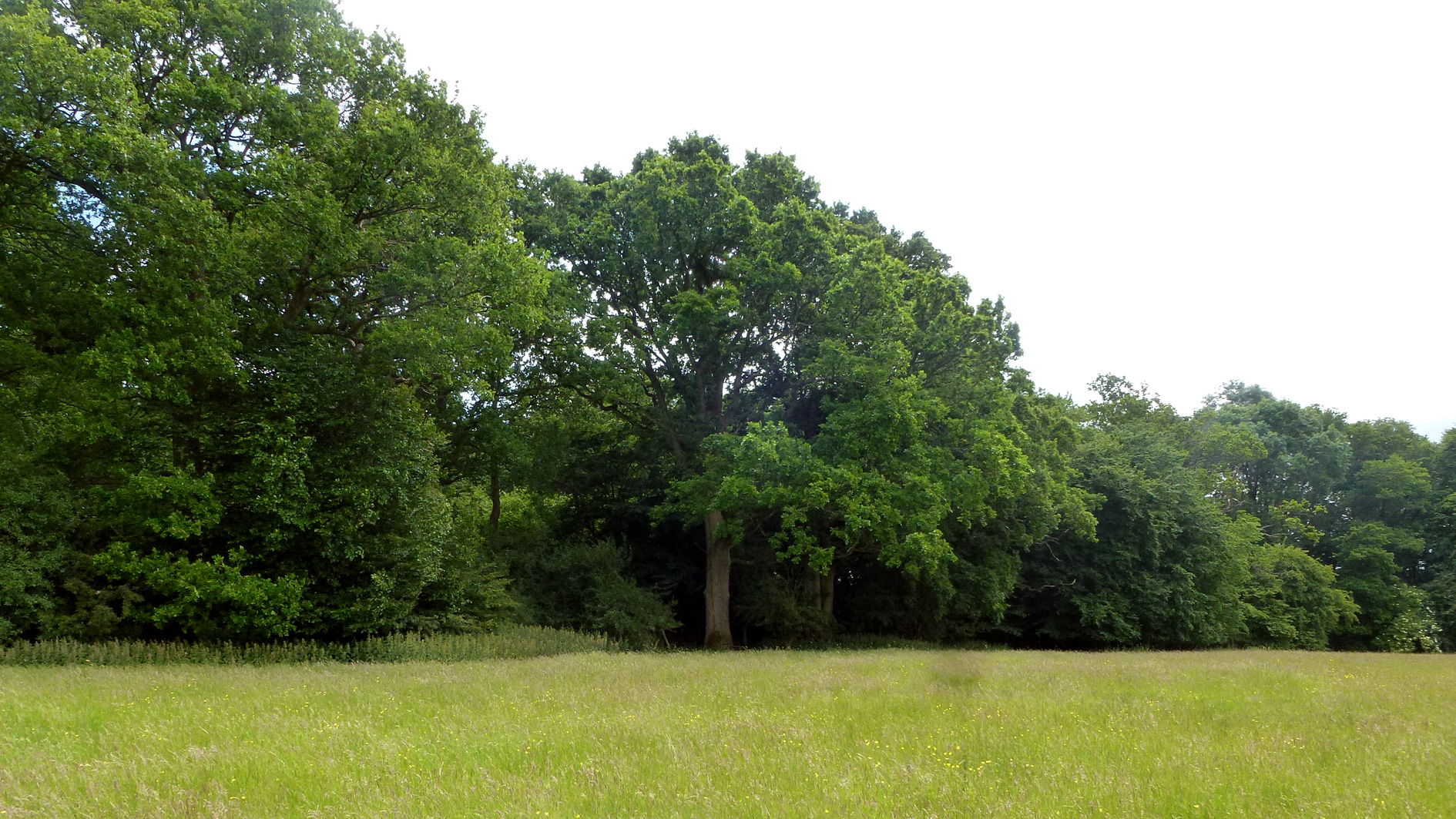 Woodland for sale in Charlwood