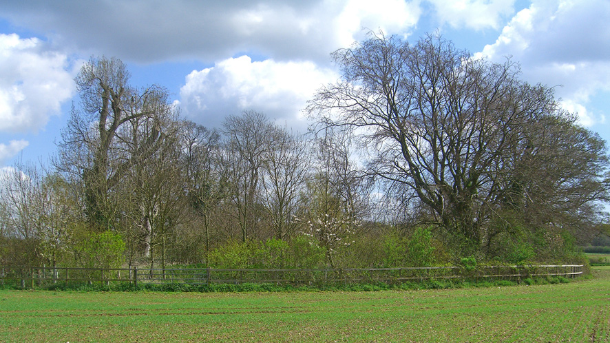 Woodland for sale in Rowlands Castle